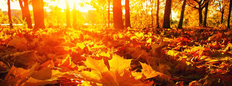 Herbst-Garten